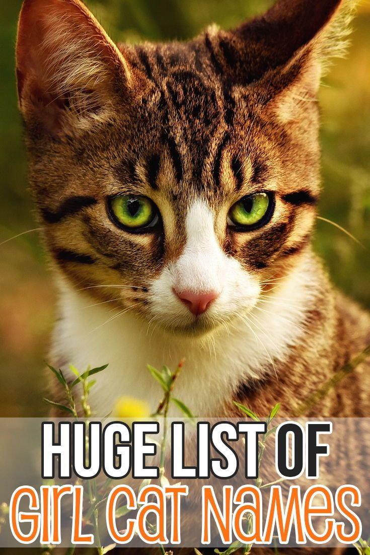 This Is Where To Look For Beautiful Girl Cat Names Pet Pets Dog Cat Dogs Cats Petname Petnames Dogname Ca Girl Cat Names Kitten Names Girl Cat Names