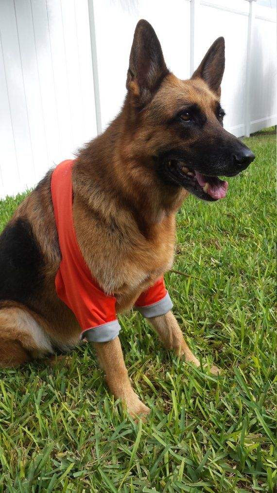 K9 Callus Cuff Protectors What should I do about my dog's