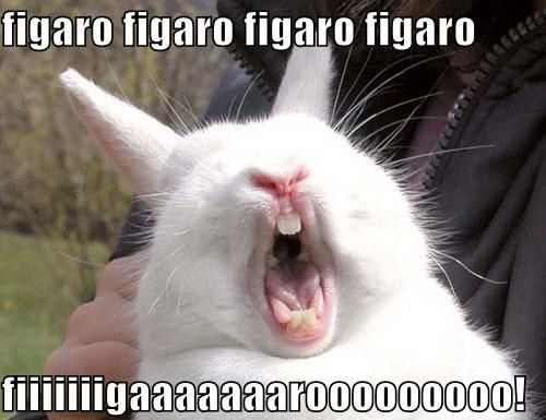 Funny Easter Bunny – Fluffy And Cute : Funny Pictures