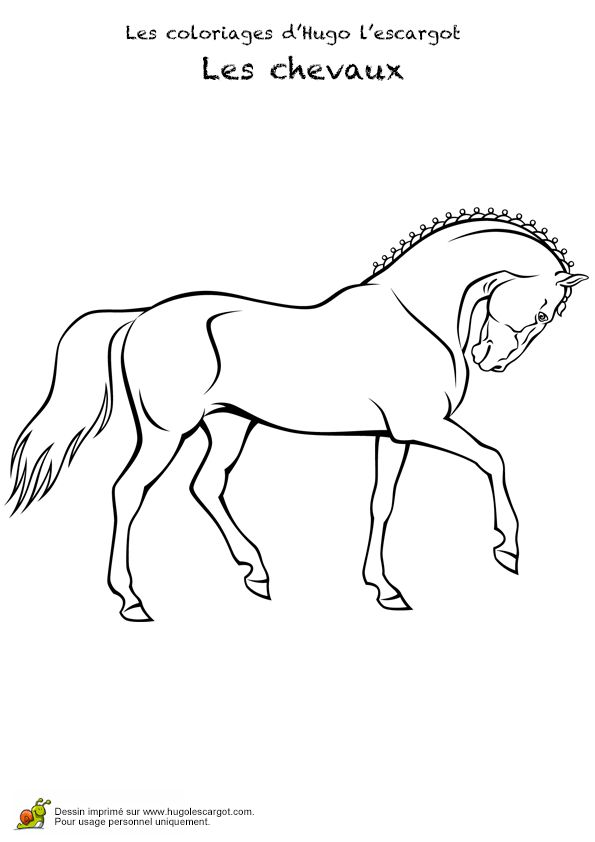 191 best Coloriages animaux de compagnie images on Pinterest | Pets, Coloring pages and Horses