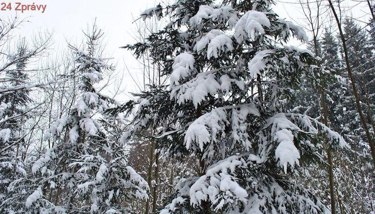 Předpověď počasí na noc a pondělí 26. února