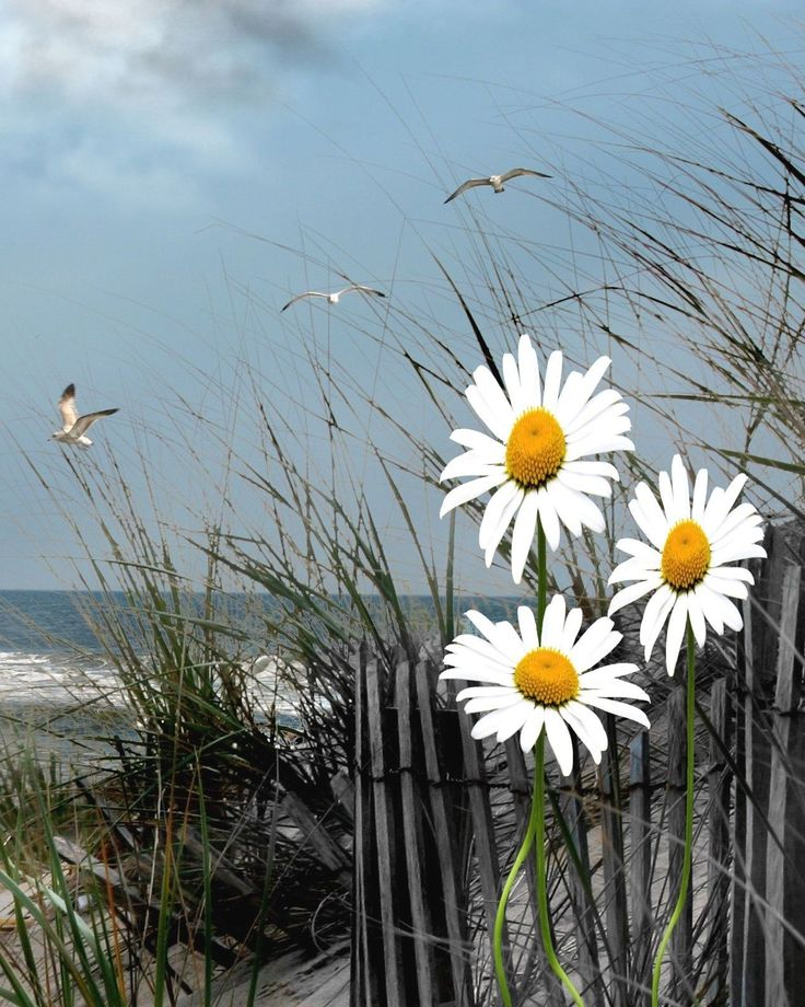 Daisy Flower Wall Art Seascape Beach Bathroom Bedroom Decor Picture | eBay
