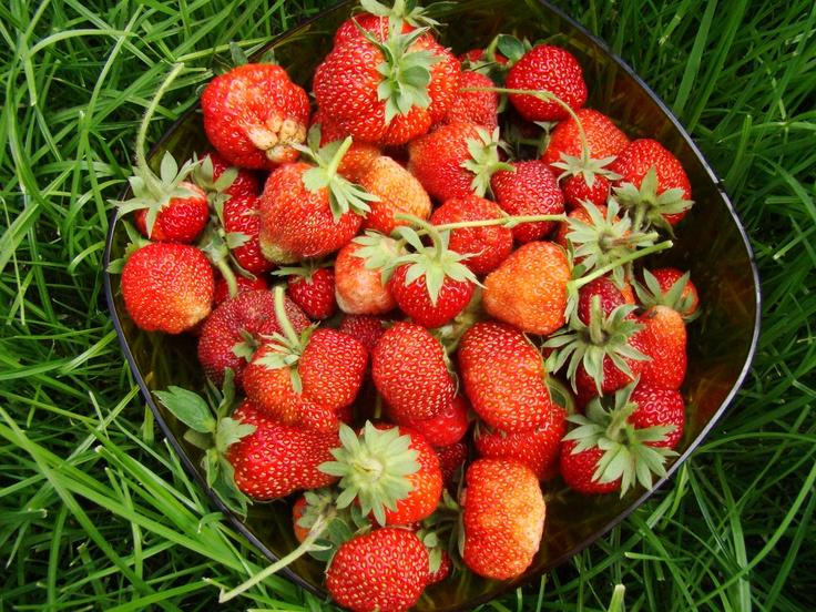 Strawberrish summer