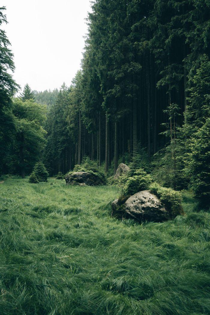 Von einem Wochenende voller Streifzüge durch ein grünes Wunderland. – #Wälder #Grün #Stri …, #Wald …