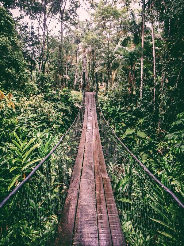 Jungle #brazil #vscocam | Stephen Ninaber | VSCO Grid®