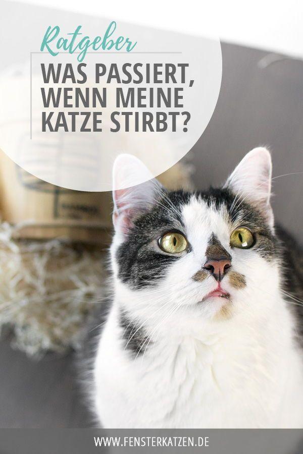 Was passiert, wenn meine Katze stirbt? | Ratgeber | Katzen