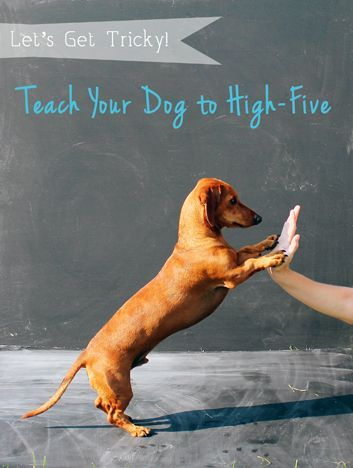 "I will learn to hi five everyone who comes in the Pinterest From your friends at phoenix dog in home dog training""k9katelynn"" see more about Scottsdale dog training at k9katelynn.com! Pinterest with over 18,600 followers! Google plus with over 120,000 views! You tube with over 400 videos and 50,000 views!! Serving the valley for 11 plus years"