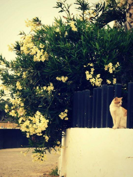 #Photography #Flower #Bush #Spain #Cat #Foreign