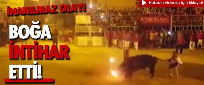İspanya'nın Valensiya şehrinde bir festivalde boynuzları ateşe verildikten sonra salınan boğa kütüğe bilerek başını vurarak intihar etti.