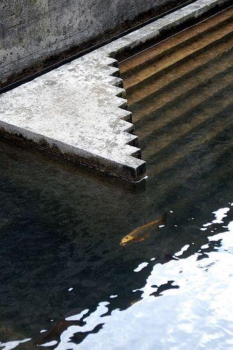 Pool - Carlo Scarpa