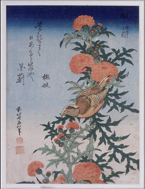 Katsushika Hokusai - Crossbill and Thistle - 1834 - Edo Period  Discover the coolest art shows in NYC at:  https://www.facebook.com/artexperiencenyc