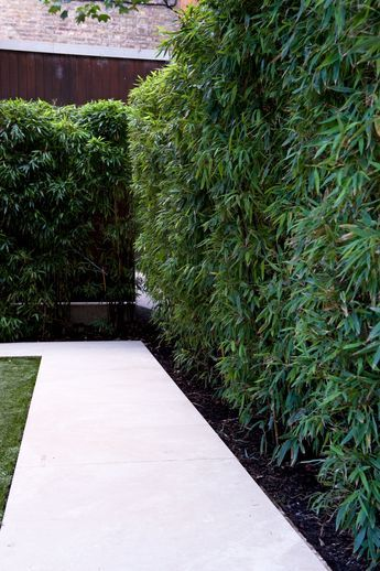 Bamboo is a great plant when you want height but not depth in a border. Strip the leaves off the bottom of the canes for a modern twist. #bambo #hedge #earthdesigns