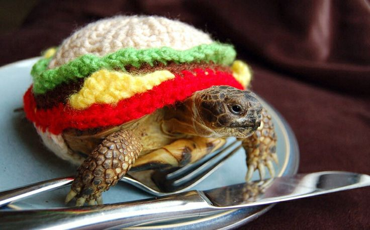 Adorable hamburger tortoise!