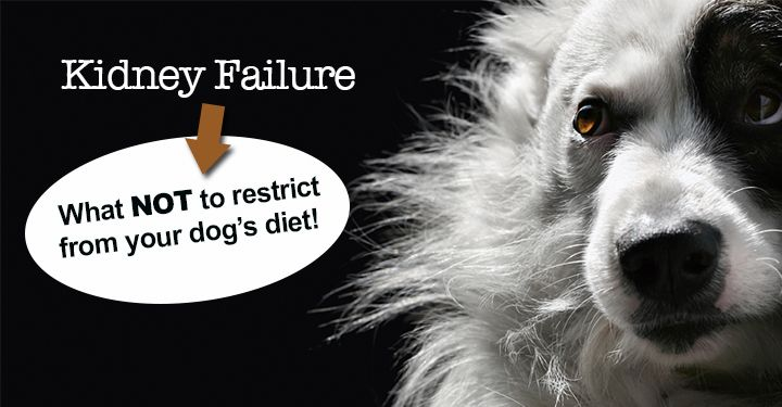 dog food kidney disease