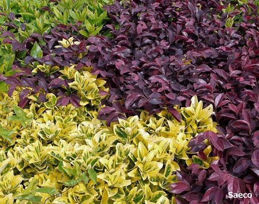 植物を並べてつくる壁の「生垣」にも流行があるんです。最近、仕事でよく使う生垣樹種の中から、おすすめをご紹介します。 | 1ページ目