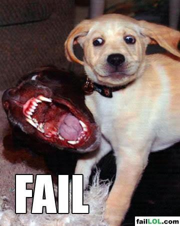 Animal fails