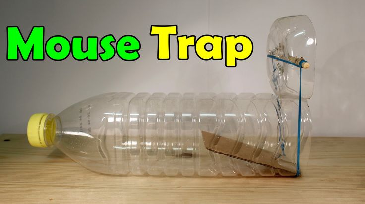 how to make mosquito trap with plastic bottle