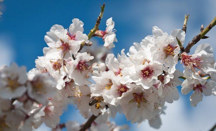 Y por fin... la primavera.