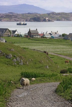 Isle of Iona, Scotland- this is the picture in my head when I visualize Scotland...especially the sheep.