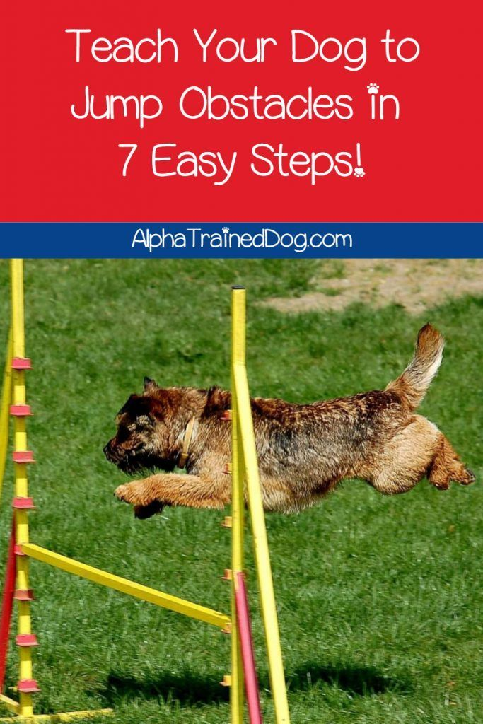 How To Teach Your Dog To Jump Over Hurdles With Videos In 2020