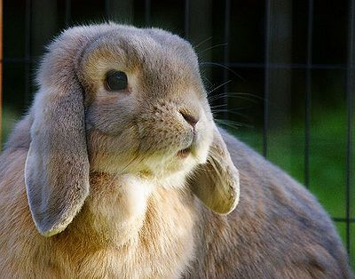 Animal Fact of the Day: Rabbits sleep 16 times per day.  http://thepetwiki.com/wiki/Rabbits