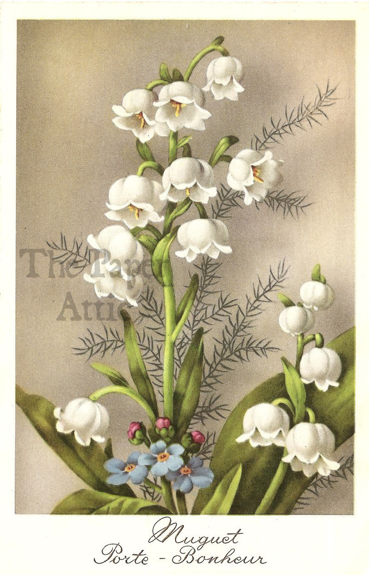 145 best lily of the valley images on pinterest flower lily of the valley vintage french postcard ebay izmirmasajfo Gallery
