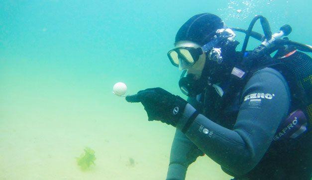 Buzos de pelotas de golf.  Buscan en las profundidades de los depósitos de agua en los campos de golf las pelotas que se han perdido para recomponerlas y revenderlas.