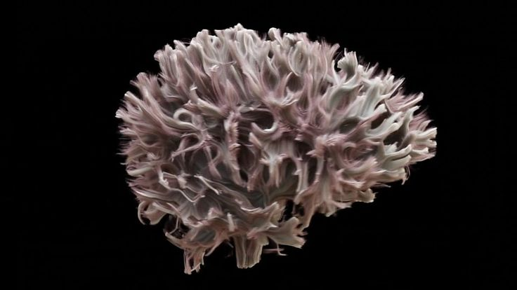 The world's most detailed scan of the brain's internal wiring has been produced by Cardiff University.