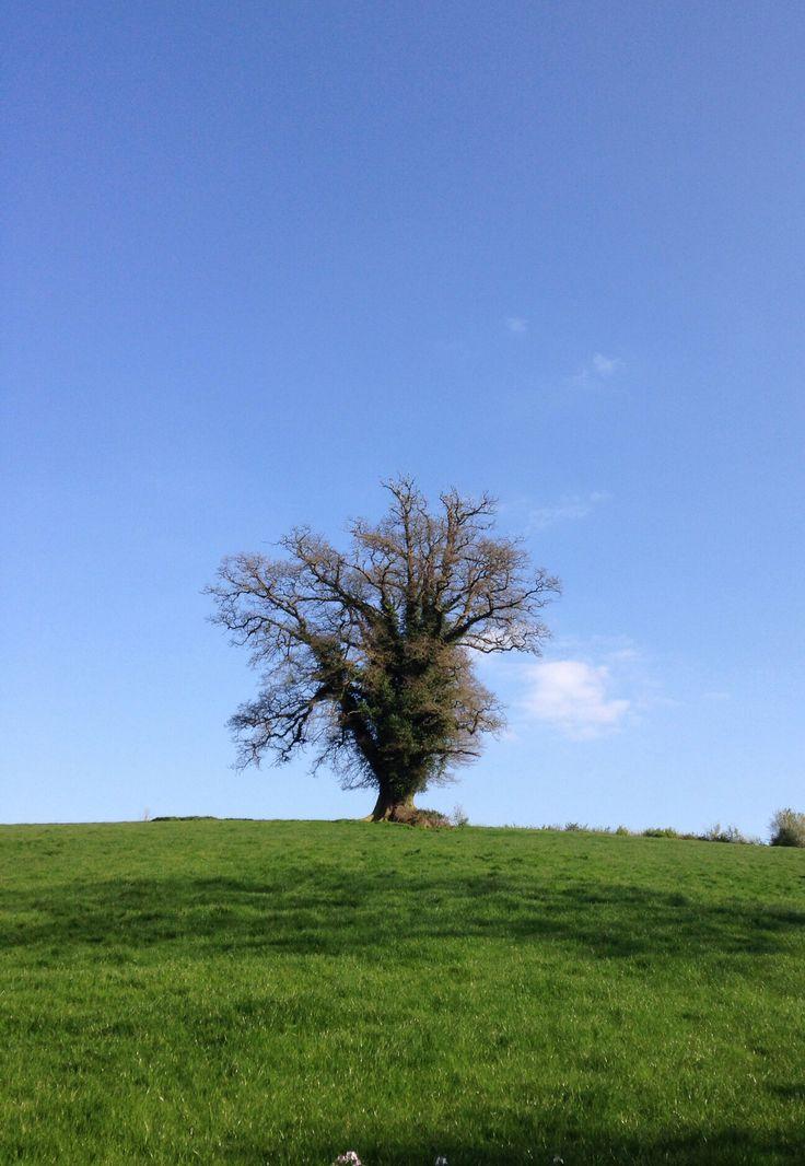 Tree, Peasedown St. John, April 2014