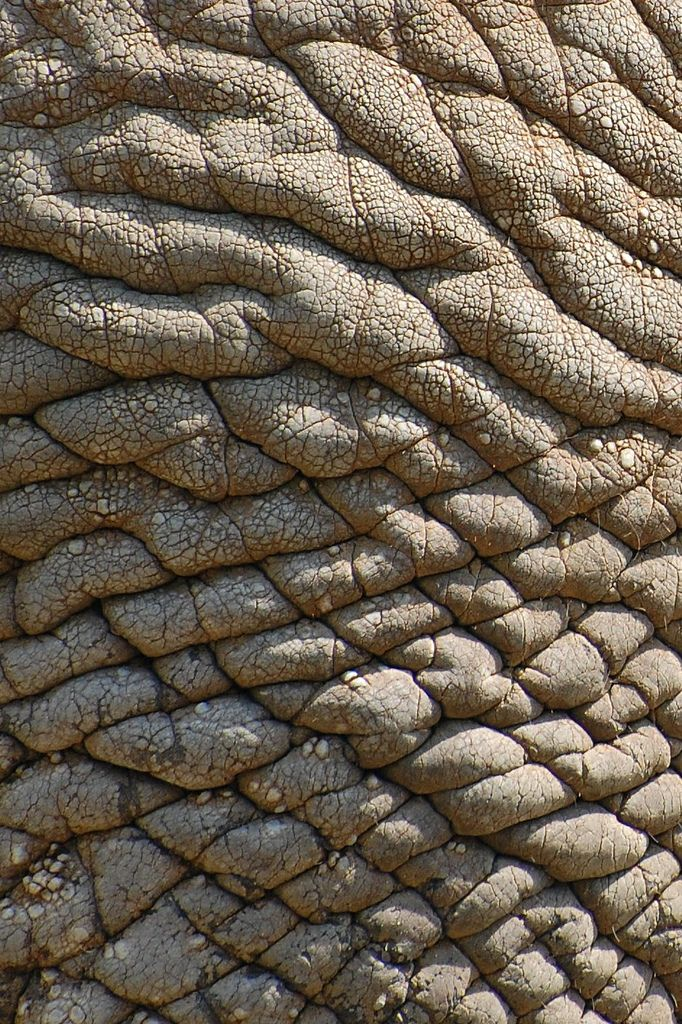 Elephant Skin    -    2008   -   David Gunter   -    https://www.flickr.com/photos/dg_pics/2545610906/