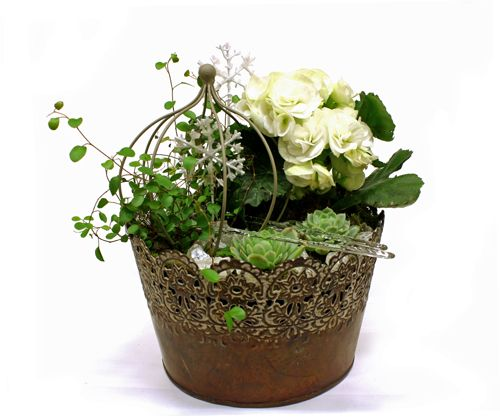 http://holmsundsblommor.blogspot.se/2014/12/arets-sista-julgrupper.html Julgrupp med vit begonia, echeveria, plättar i luften och rund blomställning