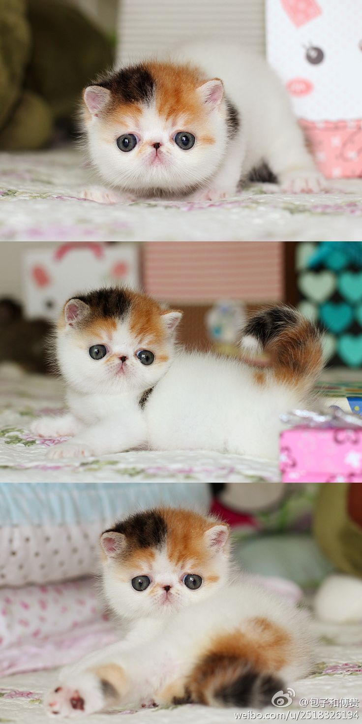 This is just too adorable!