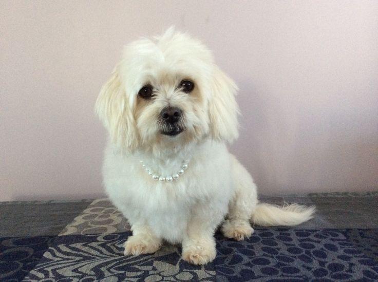 Pearl puppy xox