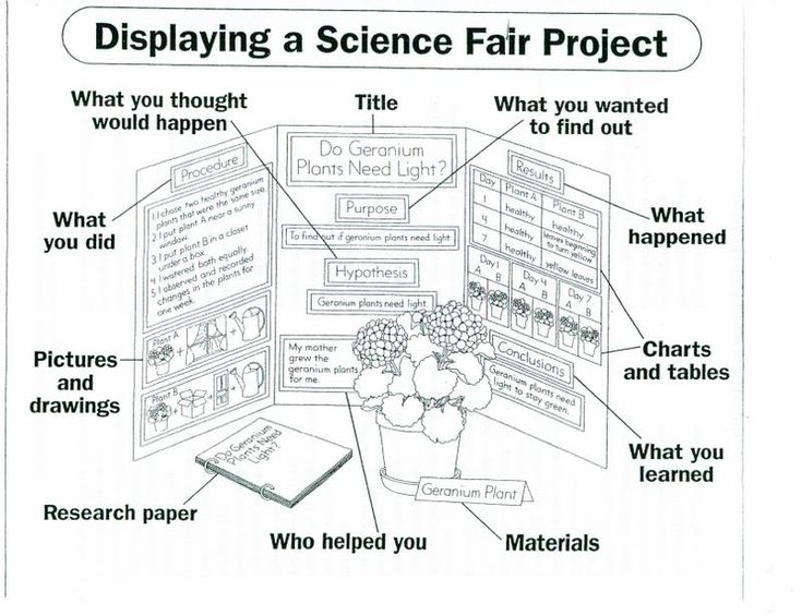 science fair essay layout How to format a research paper using either mla or how to format your research paper //wwwsciencebuddiesorg/science-fair-projects/science-fair/how-to-format.