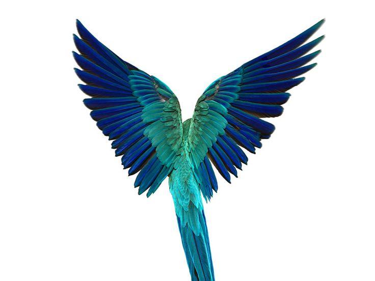 Andrew Zuckerman - Blue Macaw