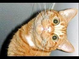Bildergebnis für funny cats videos