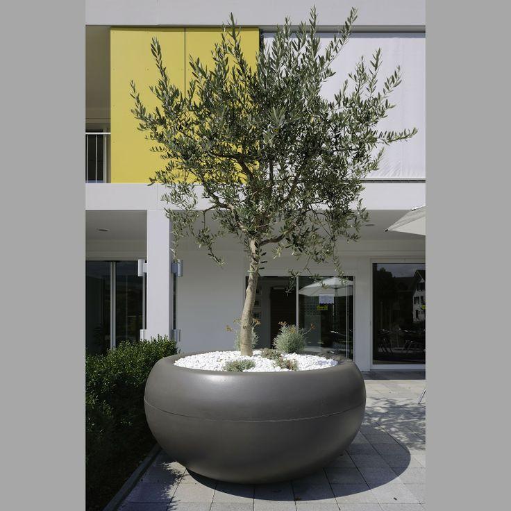 Olive Tree Planter Modern Garden Garden Architecture