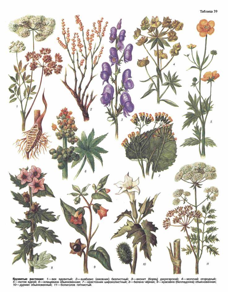 Ядовитые растения (Сельскохозяйственный энциклопедический словарь / Гл.ред. Месяц, 1989).