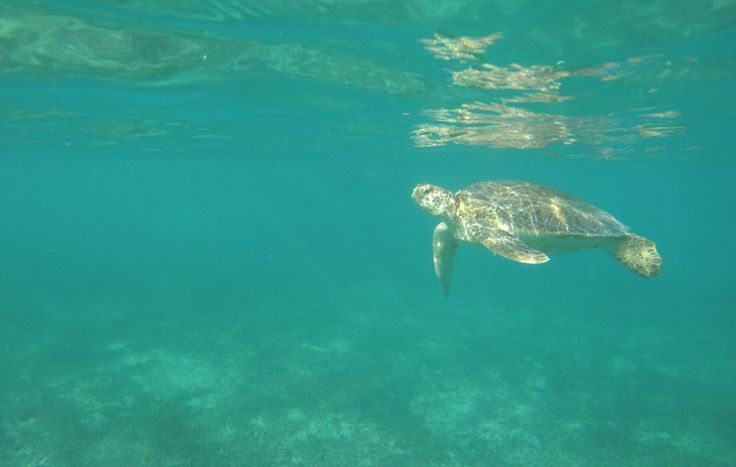 Swimming with Turtles in Tulum, Mexico