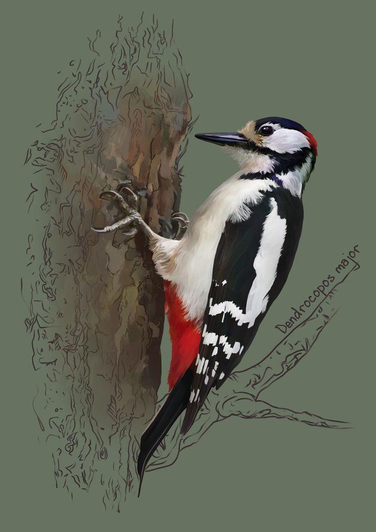 Great spotted woodpecker, Kate Kondrukhova on ArtStation at https://www.artstation.com/artwork/ly6mJ