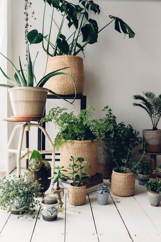 Pflanzen, Spielzeug, Krimskrams: In geflochtenen K…