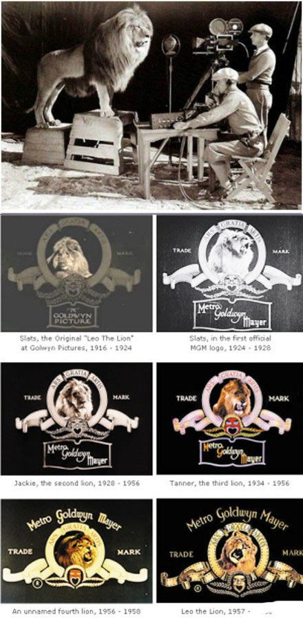 Trade mark of Metro Goldwyn Mayer  And where El Monte High School (CA) is is where the lions were trained that were used for Metro Goldwyn Mayer and the movies.