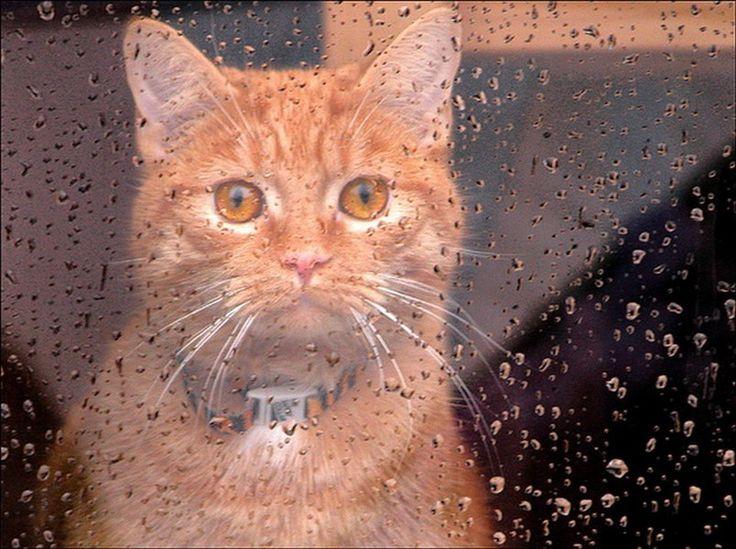 Грустный кот за окном в дождливый день