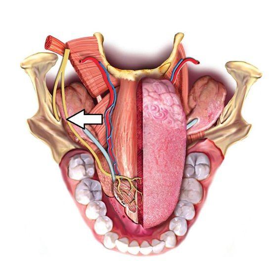 168 Best Dental Anatomy Images On Pinterest Dental Anatomy Teeth