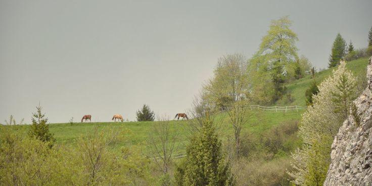 #beautyfullplace #poland #pieniny #horses