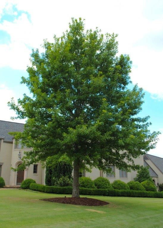 26 best images about arbor day on pinterest - Trees for shade in small spaces concept ...