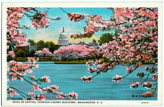 Vintage Washington Dc Postcard Vista Of Capitol Through Etsy Postcard American Art Art Images