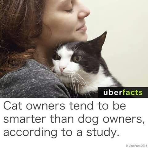 Cat owners