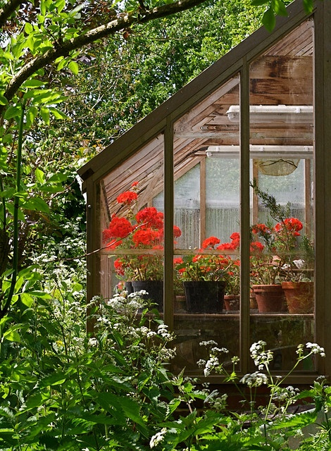 I would love to have a small green house for all of my plants during the winter.