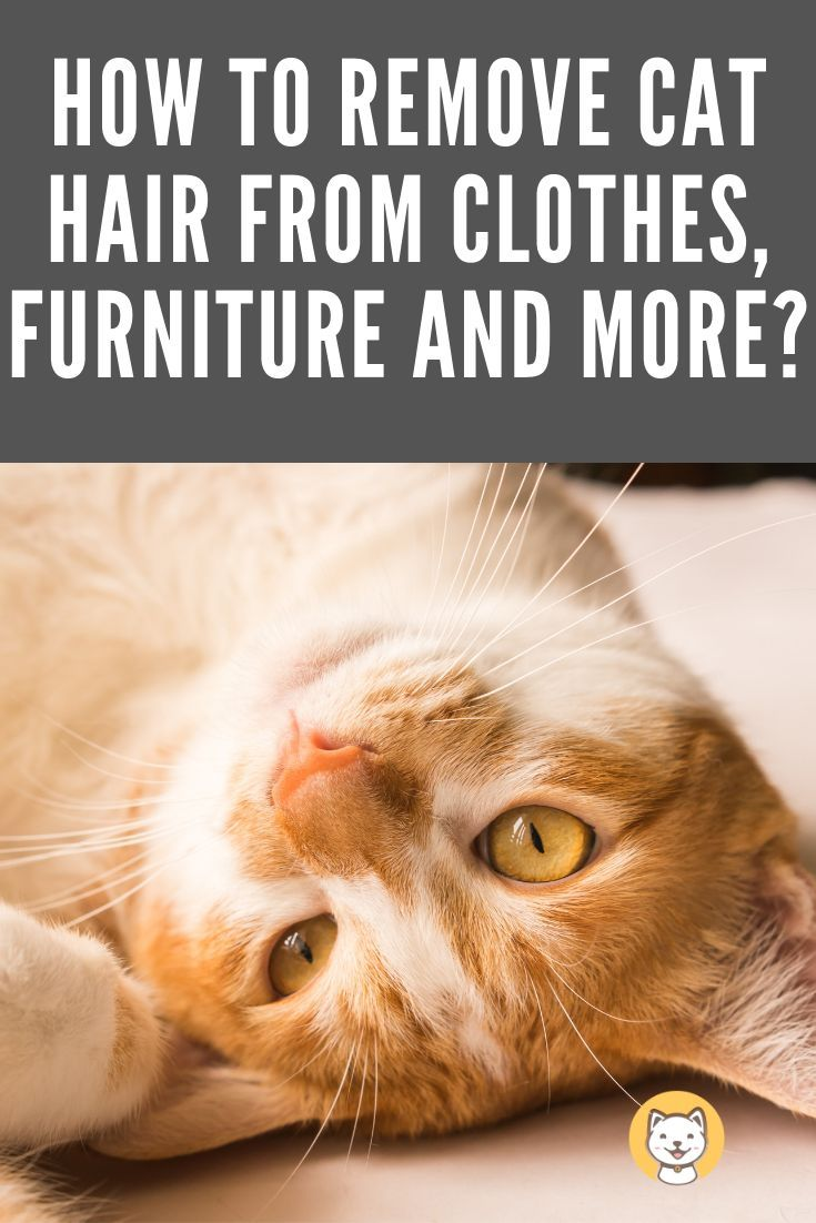 How To Remove Cat Hair From Clothes Furniture And More Cat Hair Pet Hair Removal Cat Health